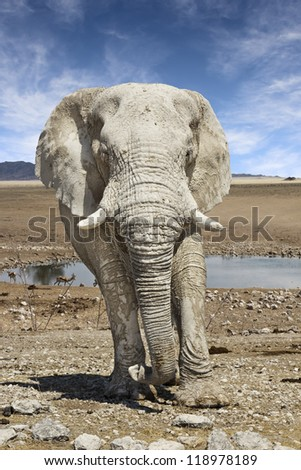 approaching elephant in Namibia