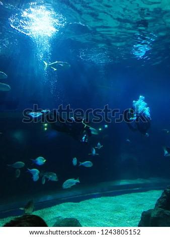 Aquanaut feed the fish