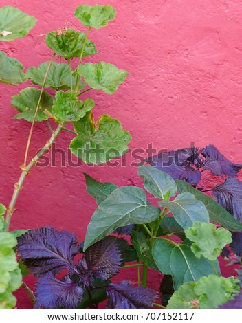 artistic photo of green and purple plants in front of a pink wall