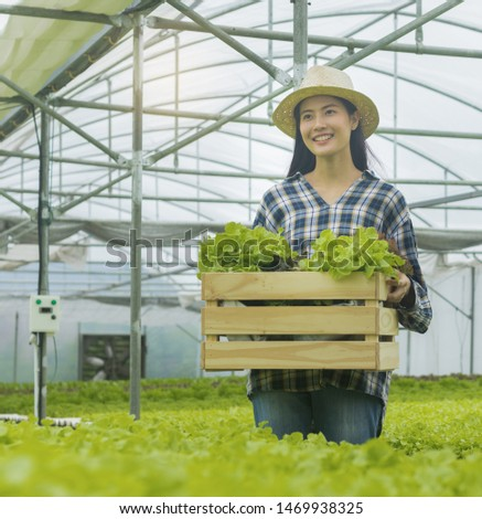 Asian woman holding a basket of fresh vegetables and organic vegetables from the farm. Vegetable cultivation and hydroponics. Health concept for agriculture