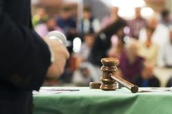 auction  bid sale judgment mallet with public