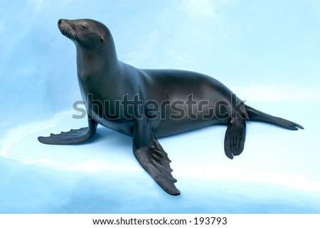 """Auto"" the Sea Lion"