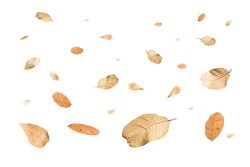 Autumn falling leaves,isolated on white background.