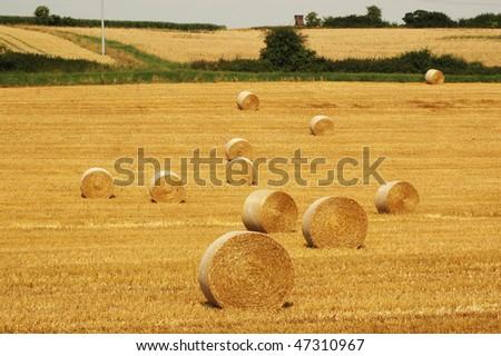 Autumn, harvesting. Bales of straw.