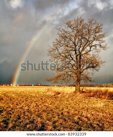 Autumn Landscape. Rainbow over a field with an oak tree.