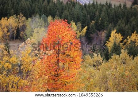autumn landscapes.artvin /savsat #1049553266