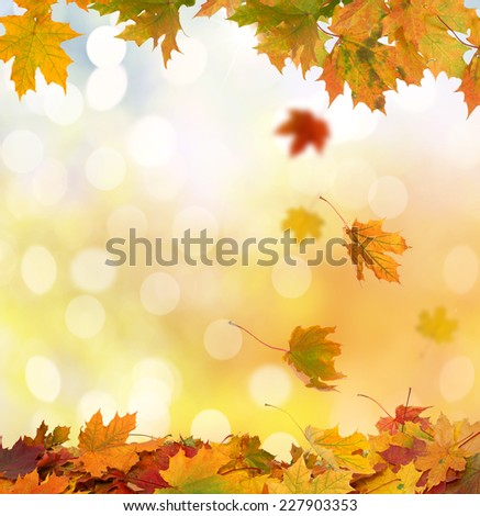 Autumn Leaves #227903353
