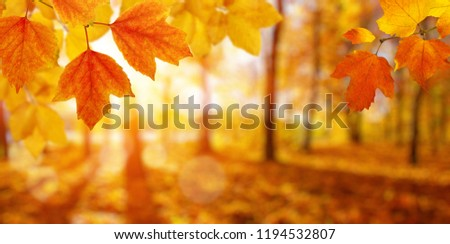 Autumn leaves on the sun and blurred trees . Fall background. #1194532807