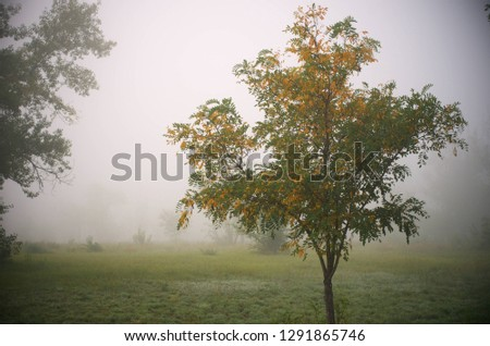 Autumn nature pictures