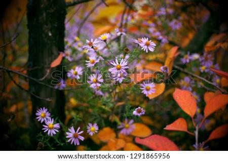 Autumn nature pictures