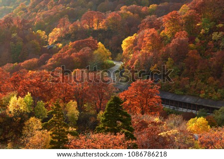 Autumn season at Towada – Hachimantai National Park, Akita, Japan. #1086786218