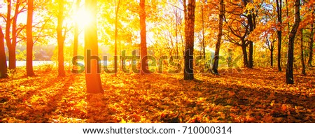 autumn trees on sun in park