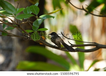 Baby bird Baby bird waiting for mom. Boiled leaves with birds  birds  #1500596795