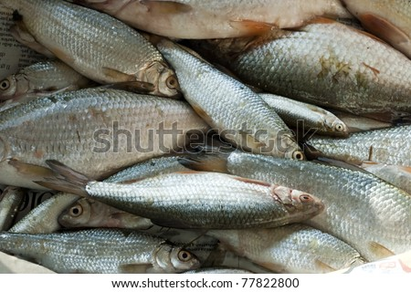 Large edible fish cake ideas and designs for Edible freshwater fish