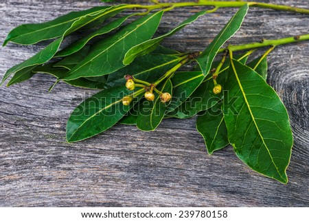 background with branches  of laurel  leaves   on a wooden table