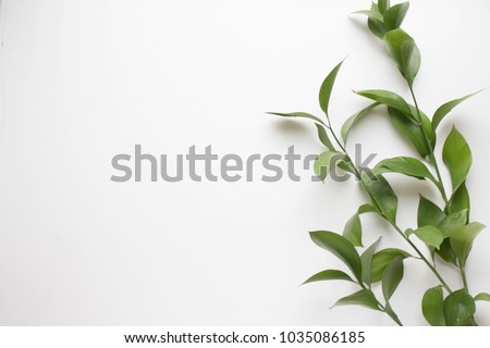 background with green branch. minimalistic background with plants