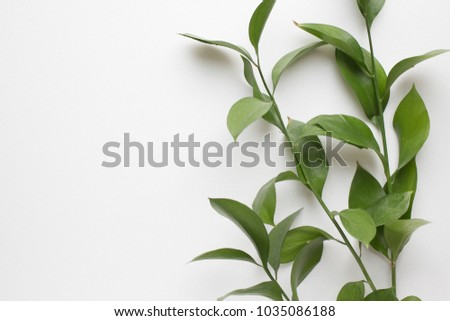 background with green branch. minimalistic background with plants #1035086188