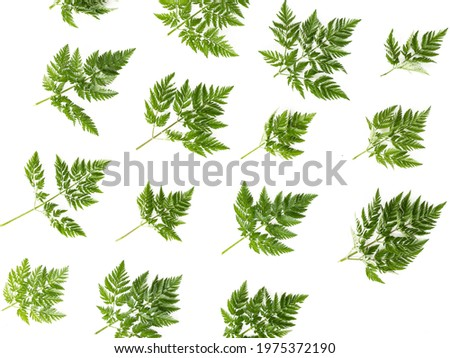 background with leaves of different grass, green grass Сток-фото ©