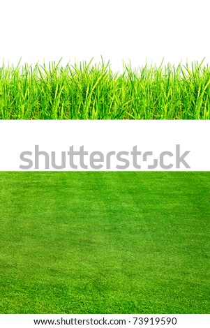 2 backgrounds of fresh spring green grass Isolated On White