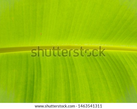 banana leaf, green leaf, Banana leaf green background #1463541311