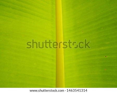 banana leaf, green leaf, Banana leaf green background #1463541314