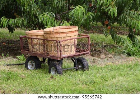 """Basket Wagon"" -- U-Pick Orchard -- Fennville, Michigan, USA."