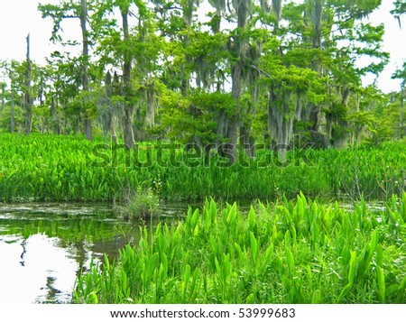 Bayou Country Unspoiled
