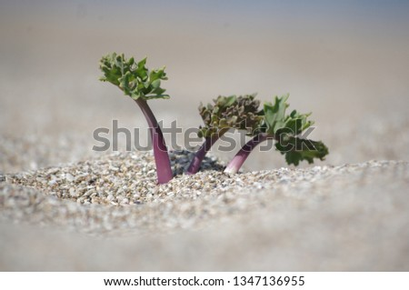 beach shore plant #1347136955