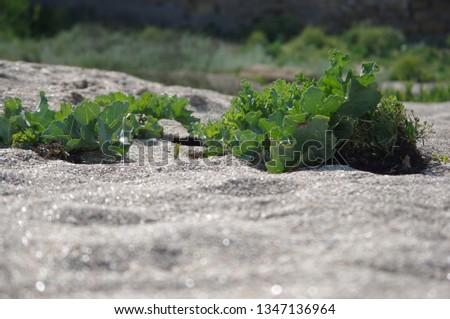 beach shore plant #1347136964