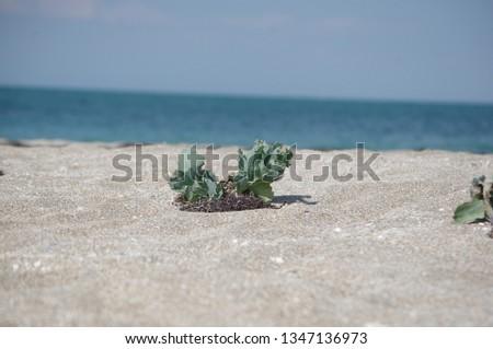 beach shore plant #1347136973