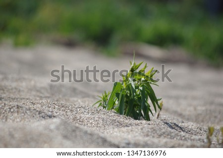 beach shore plant #1347136976