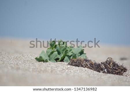 beach shore plant #1347136982