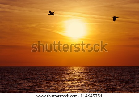 beach sunset and birds