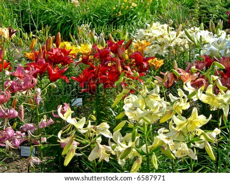 Beautiful botanical garden with daylily and many plant species stock
