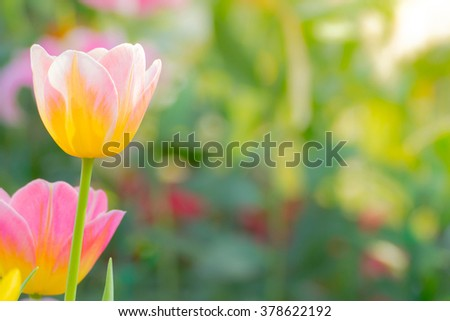 Beautiful bouquet of tulips. colorful tulips. #378622192
