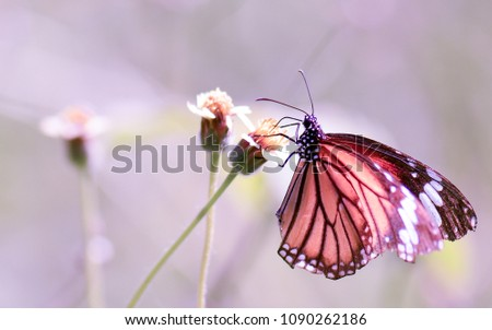 Beautiful butterfly with blurred background.
