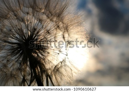 Beautiful Dandelion in springtime  #1090610627
