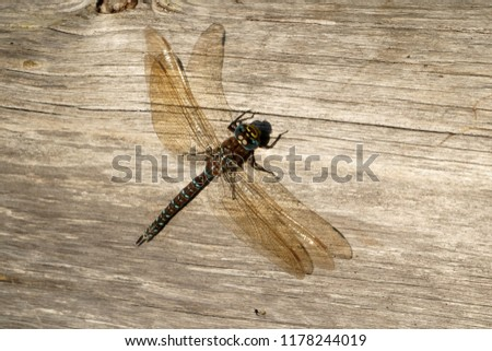 Beautiful dragonfly on the boards                               #1178244019