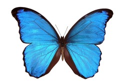 Beautiful exotic blue butterfly isolated on a white background. 2020 trend color