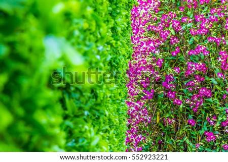 Beautiful  flower garden in-THAILAND. #552923221