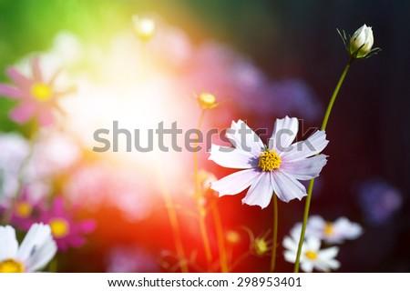 beautiful flowers on magic garden background. toned #298953401