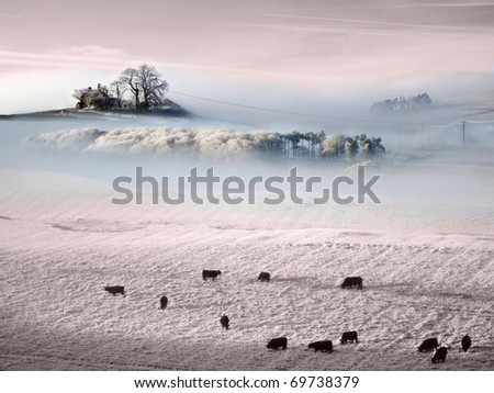 Beautiful  Frozen Prairie with trees in mists and livestock grazing as the sun sets