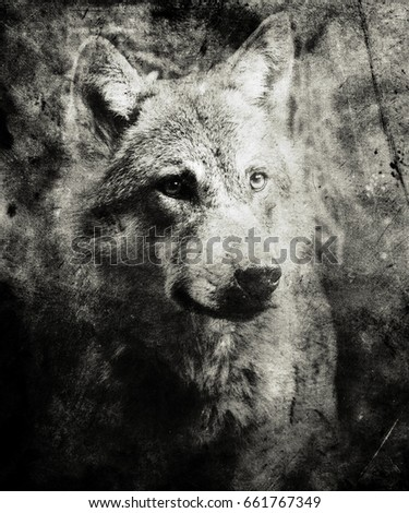 beautiful grunge wolf...