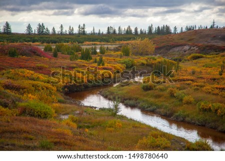 Beautiful landscape of forest-tundra, Autumn in the tundra. Yellow spruce branches in autumn colors on the moss background. Tundra, Russia.