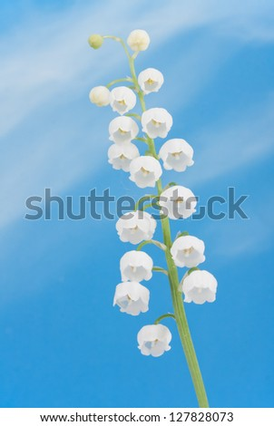 Beautiful lily of the valley on the  blue sky