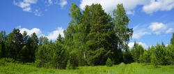 Beautiful natural landscape. Forest and sky. Green forest on a background of blue sky and white clouds. A clear sunny summer day at the edge of the forest. The road to the forest.