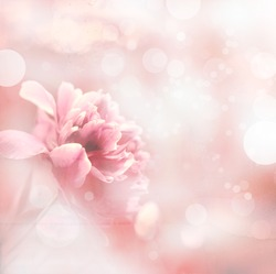 Beautiful peony flowers in sun blure and light rays with colored filters