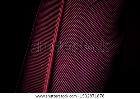 Beautiful red feather pattern texture background ,Red macro feather,Macaw Feathers (Maroon) Feather, Bird, Animal, Maroon, Red,Red feather ,Feather, Taiwan, Black Color, Close-up, Backgrounds