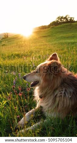 Stock Photo                        Beautiful sunset with dog