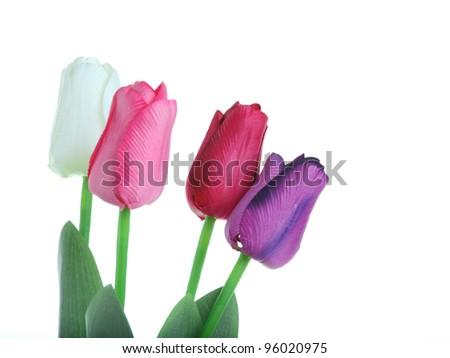 beautiful tulip on white background